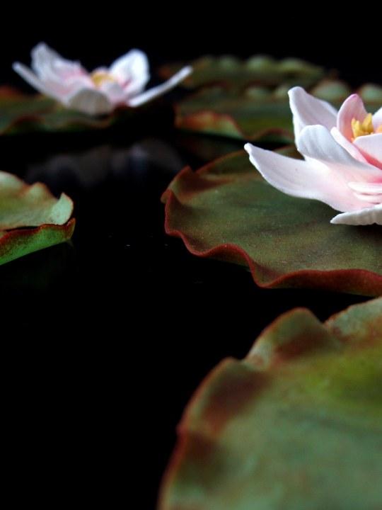 Fondant water lily