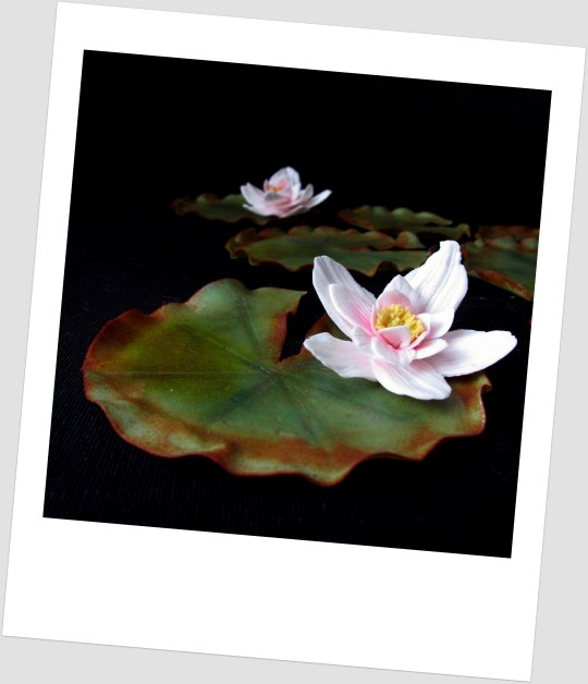 the fondant water lily